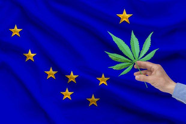 Alaska state flag with marijuana.