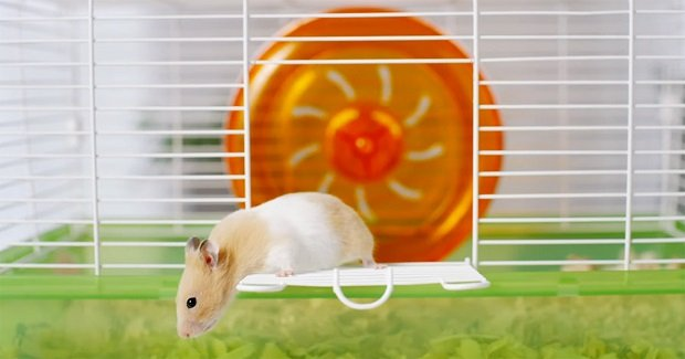 Screenshot of hamster in CUNA video.