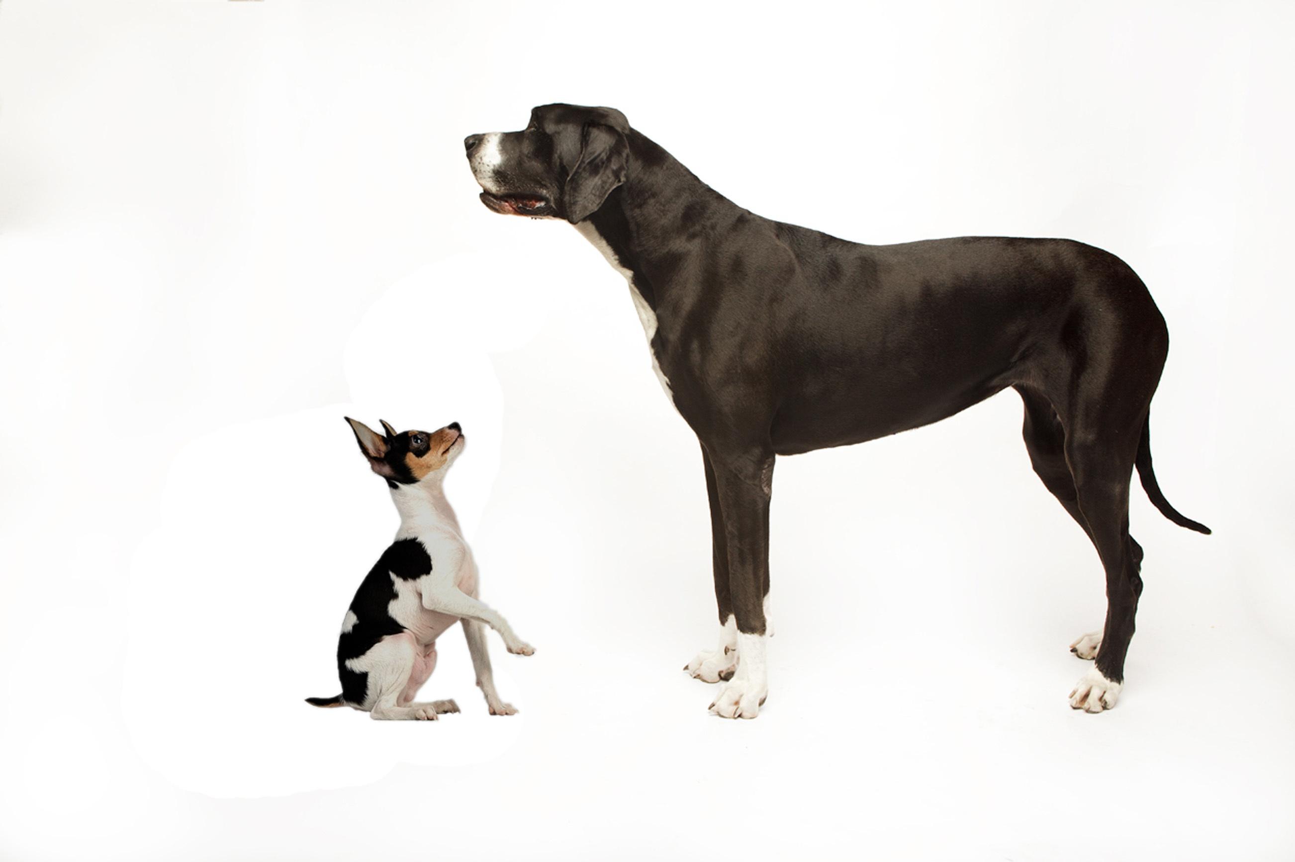 большая и маленькая собака фото только